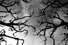 Scary branches silhouettes stock photos