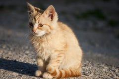 Scary cat Stock Photos