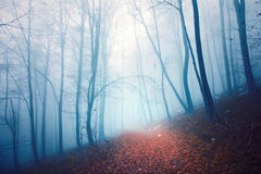 Scary colored foggy forest path Royalty Free Stock Photography