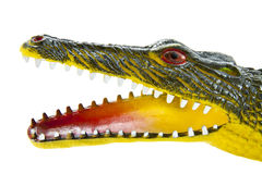 Scary crocodile head Royalty Free Stock Images