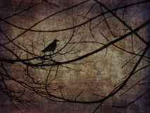 Scary Crow on the branches Stock Photography