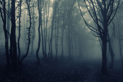 Scary dark forest with fog on halloween. Scary dark creepy surreal forest with blue fog on halloween stock photography