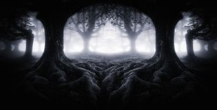 Scary dark forest with tree roots. Symmetry effect royalty free stock photo