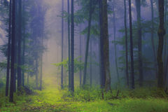 Scary foggy forest scene Stock Photos