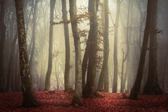 Scary fogy forest Stock Photography