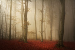Scary fogy forest Stock Photos