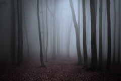 Scary fogy forest Stock Images