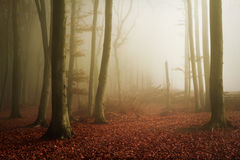 Scary fogy forest Stock Photo