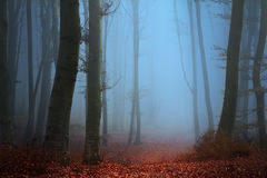 Scary fogy forest Stock Image
