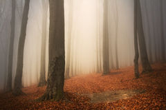 Scary fogy forest Royalty Free Stock Photos