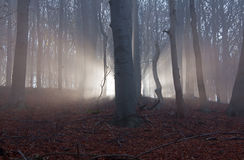 Scary forest Royalty Free Stock Photos