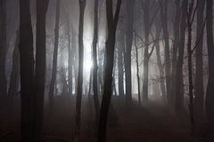 Scary forest Stock Photos