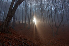 Scary forest Royalty Free Stock Photography
