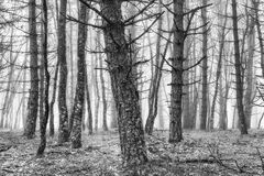 Scary forest with creepy trees Stock Photos