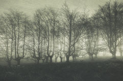 Scary forest with creepy trees Stock Image