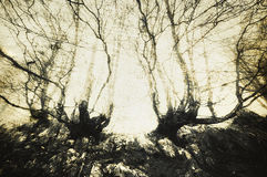 Scary forest with creepy trees Stock Images