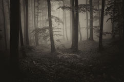 Scary forest Stock Image