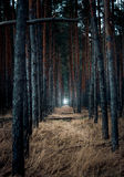 Scary forest at evening with light in the end Royalty Free Stock Images