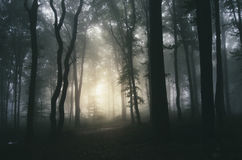 Scary forest with fog on Halloween. Scary forest with fog trough trees on Halloween stock images