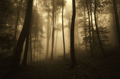 Scary forest on Halloween evening with mysterious fog Royalty Free Stock Photography