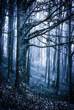 Scary forest. Moody landscape with scary forest at night Stock Images