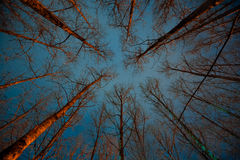 Scary forest at night. Stock Images