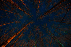 Scary forest at night. Royalty Free Stock Photos