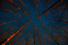 Scary forest at night. Royalty Free Stock Images