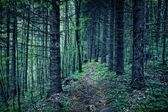 Scary forest at night Royalty Free Stock Image