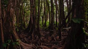 Scary forest in a place in amazon forest royalty free stock photos