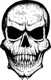 Scary front skull Stock Images