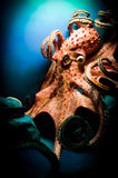 Scary Giant Octopus royalty free stock image
