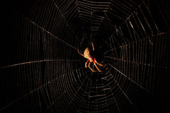 Scary hairy spider in web at night Stock Images