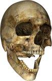 Scary Halloween Human Skull Isolated stock illustration