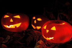 Scary Halloween pumpkins  on a black background. Scary glowing faces trick or treat. Royalty Free Stock Image