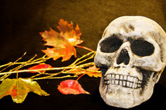 Scary Halloween skull. Celebrating Halloween with scary human skull and dead leaves royalty free stock images