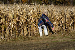 Scary haunted corn field and alien Stock Image