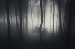 Scary haunted forest with fog Royalty Free Stock Image