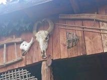 Scary horns stock photos