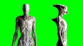 Scary, horror monster. Fear concept. Green screen isolate. Realistic 4K animation.