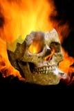 Scary Human Skull Stock Photo