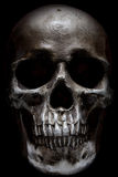 Scary human skull isolated on black background Stock Photography