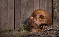 Scary Human Skull Stock Photography