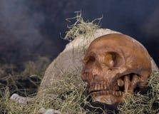 Scary Human Skull Royalty Free Stock Photo