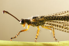 Scary insect Royalty Free Stock Images