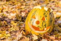 Scary jack halloween pumpkin. Halloween pumpkin in autumn leaves Royalty Free Stock Photography