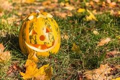 Scary jack halloween pumpkin. Halloween pumpkin in autumn leaves Royalty Free Stock Photo