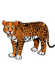 Scary leopard roaring. Wild animal Royalty Free Stock Photo
