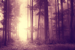 Scary light marsala color woods Royalty Free Stock Image