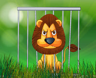A scary lion inside the cage Stock Image